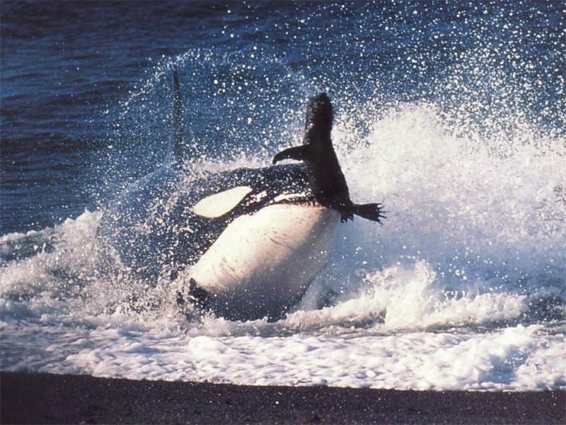 Wallpaper baleine Animaux
