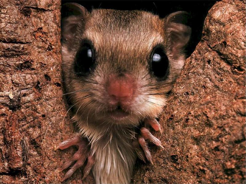 Wallpaper Animaux ecureuil
