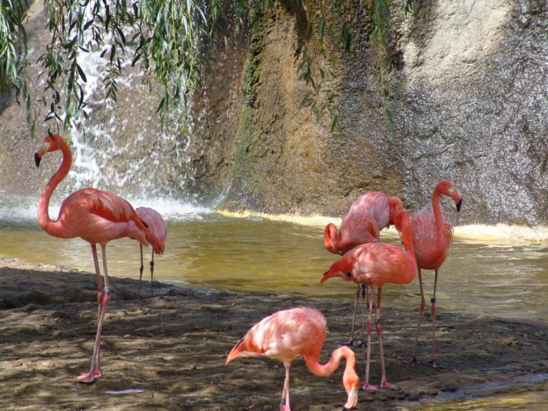 Wallpaper Animaux flamant rose