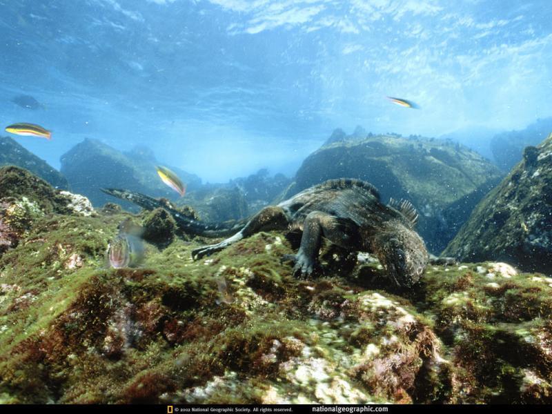 Wallpaper Animaux mer