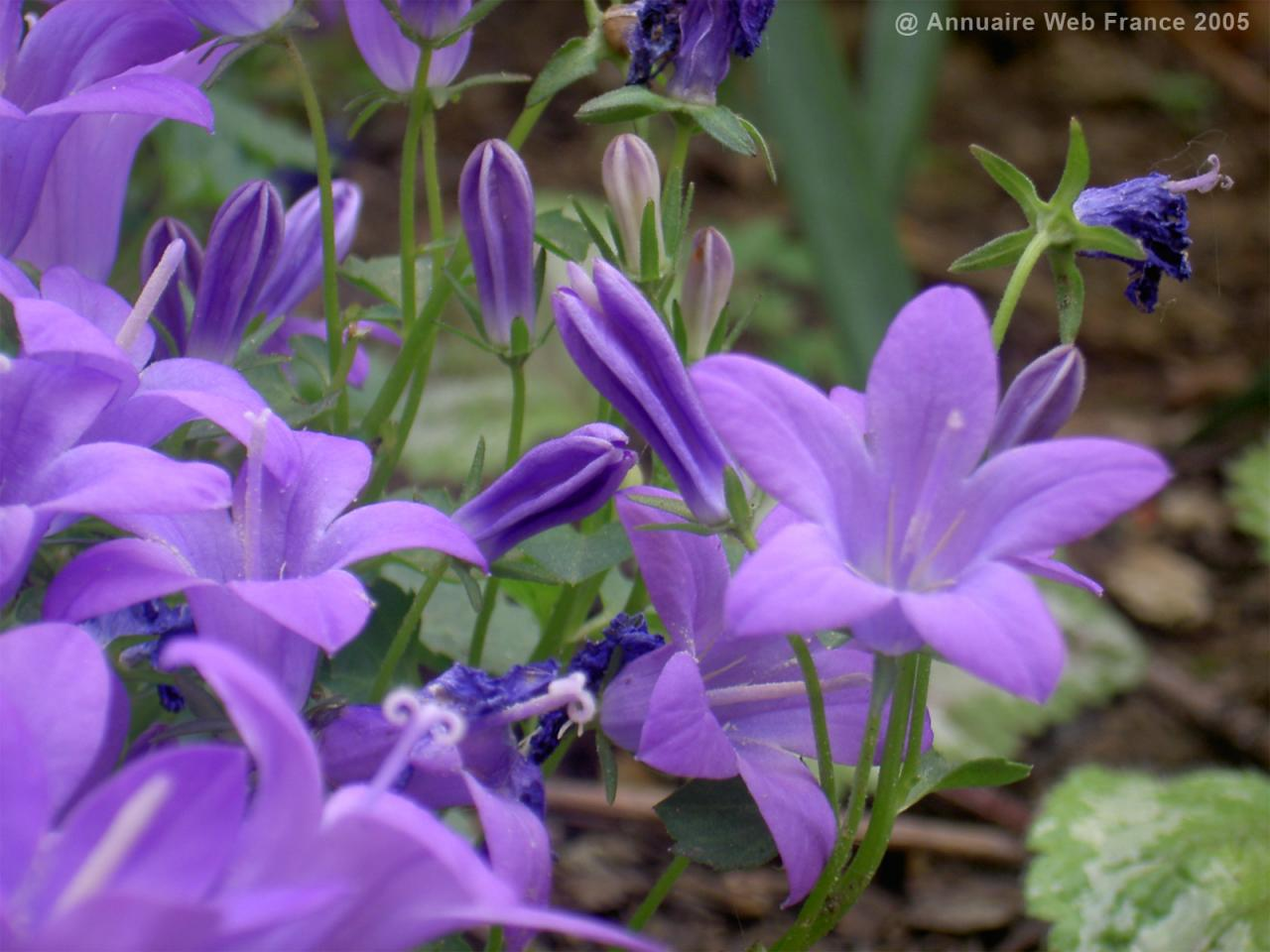 Wallpaper Nature Environnement Fleur