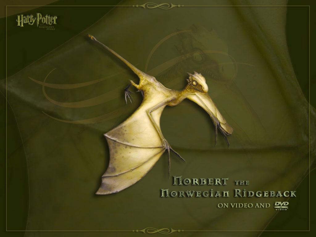 Wallpaper Harry Potter terodaptile