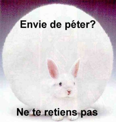 Wallpaper Humour & Insolite lapin