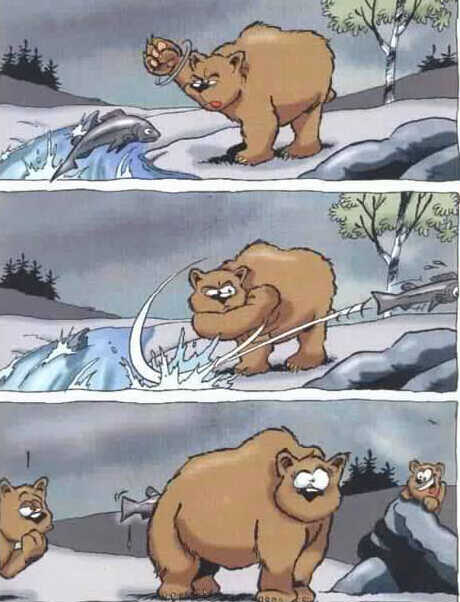 Wallpaper Humour & Insolite ours