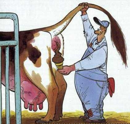 Wallpaper Humour & Insolite vache