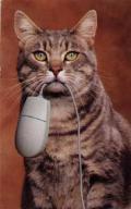 Wallpaper Humour & Insolite chat et souris