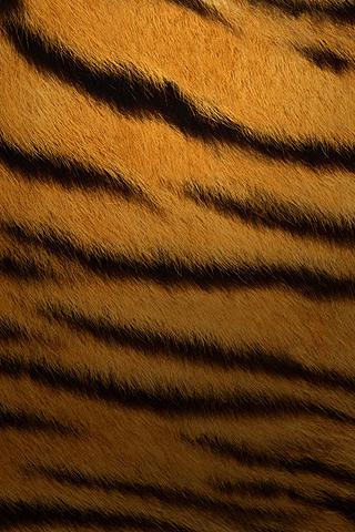 Wallpaper iPhone Design Apple OSX tiger