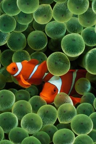 Wallpaper Nemo Poisson Clown iPhone