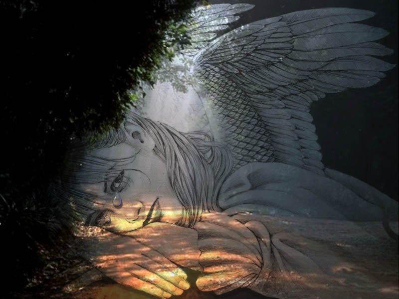Wallpaper Design Web ange