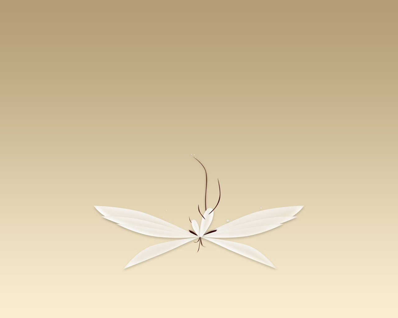 Wallpaper brun Design Web