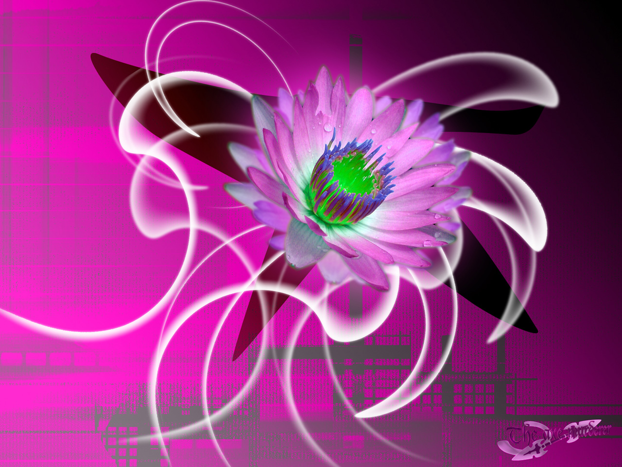 Wallpaper jolie fleur Design Web