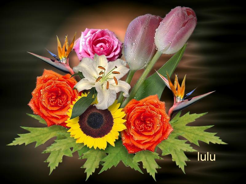Wallpaper lulu Design Web
