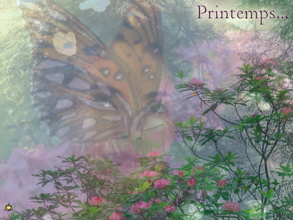 Wallpaper Design Web printemps