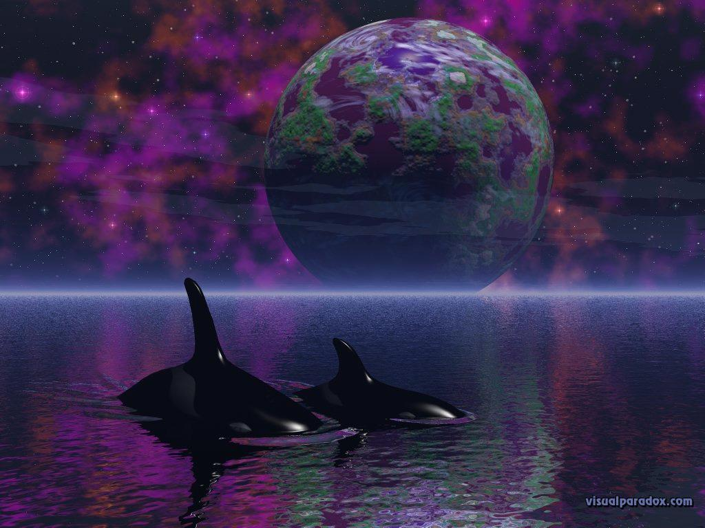 Wallpaper Design Web baleine