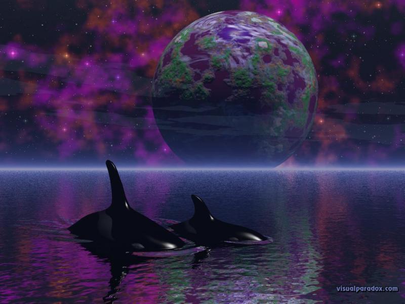 Wallpaper Design Web baleine