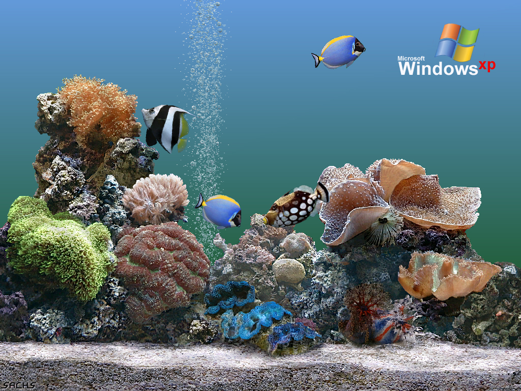 Wallpaper aquarium Theme Windows XP