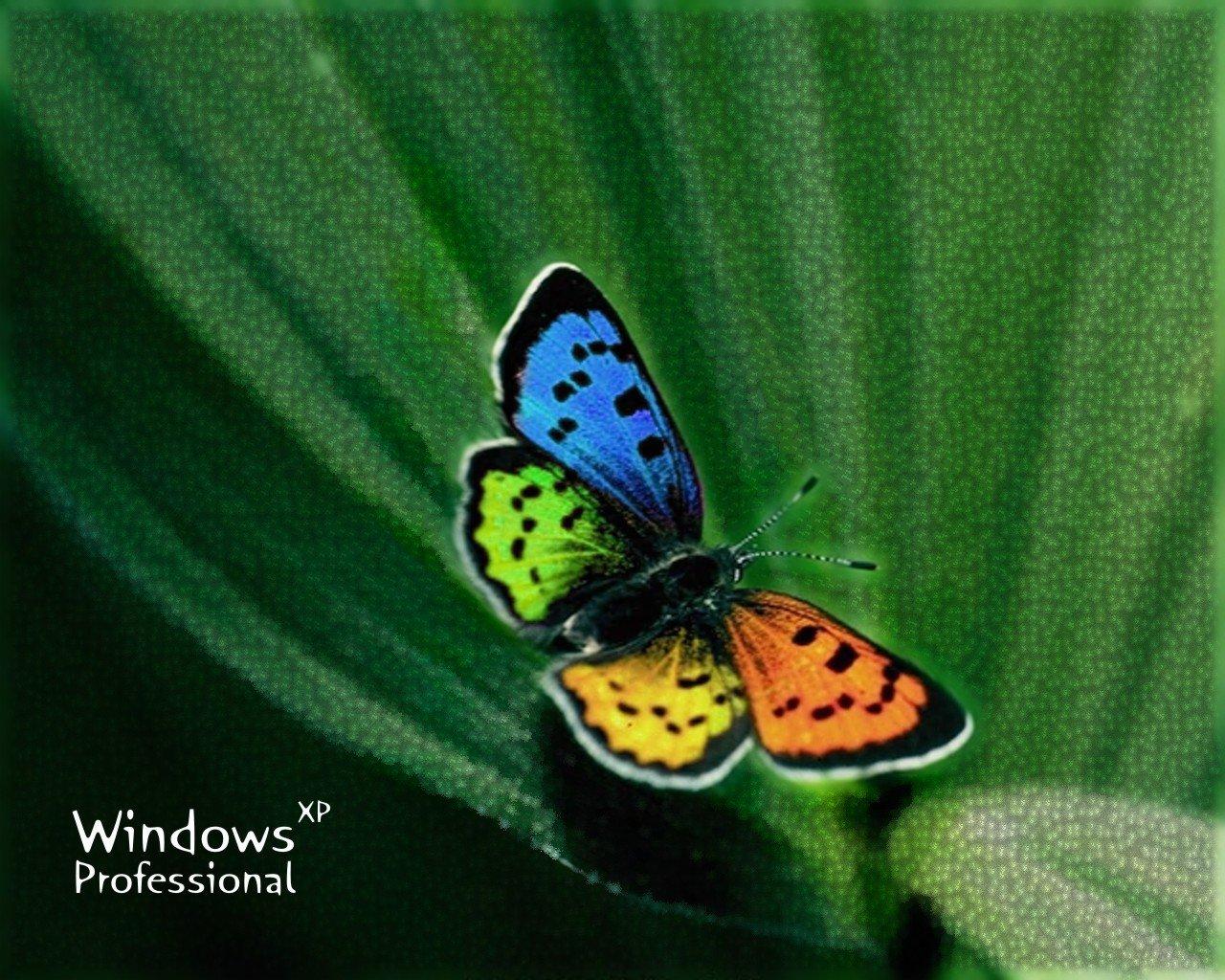 Wallpaper Theme Windows XP papillon