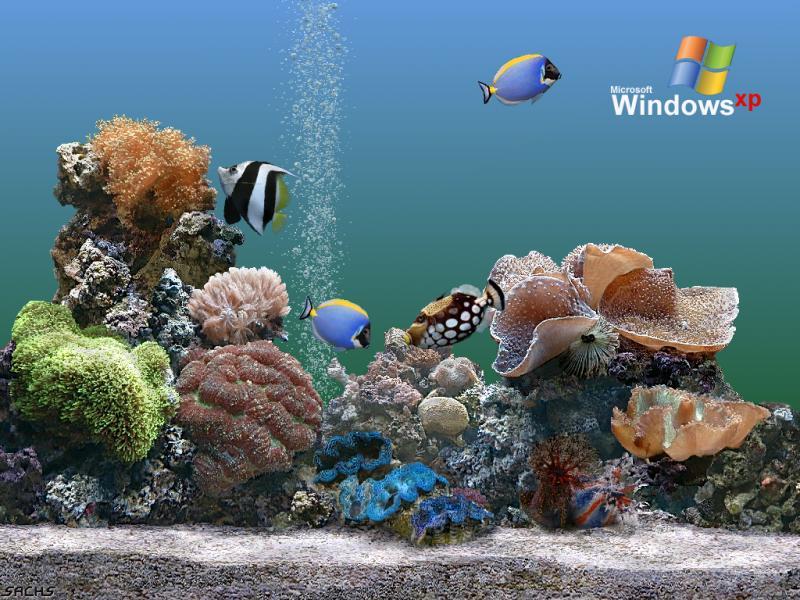 Wallpaper Theme Windows XP aquarium