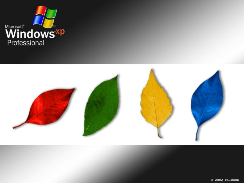 Wallpaper Theme Windows XP WIN XP Fall