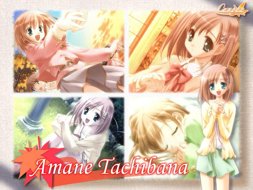 Wallpaper Canvas amane tachibana