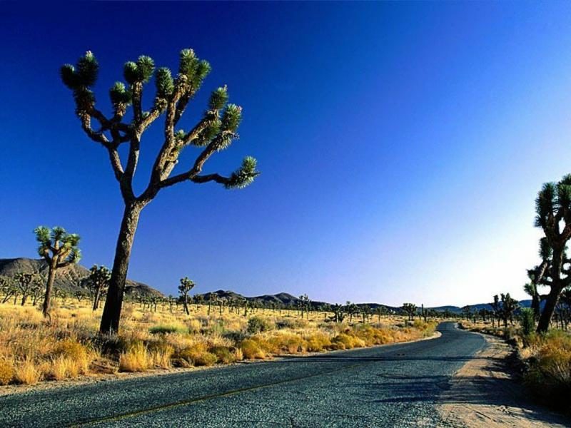 Wallpaper desert Paysages